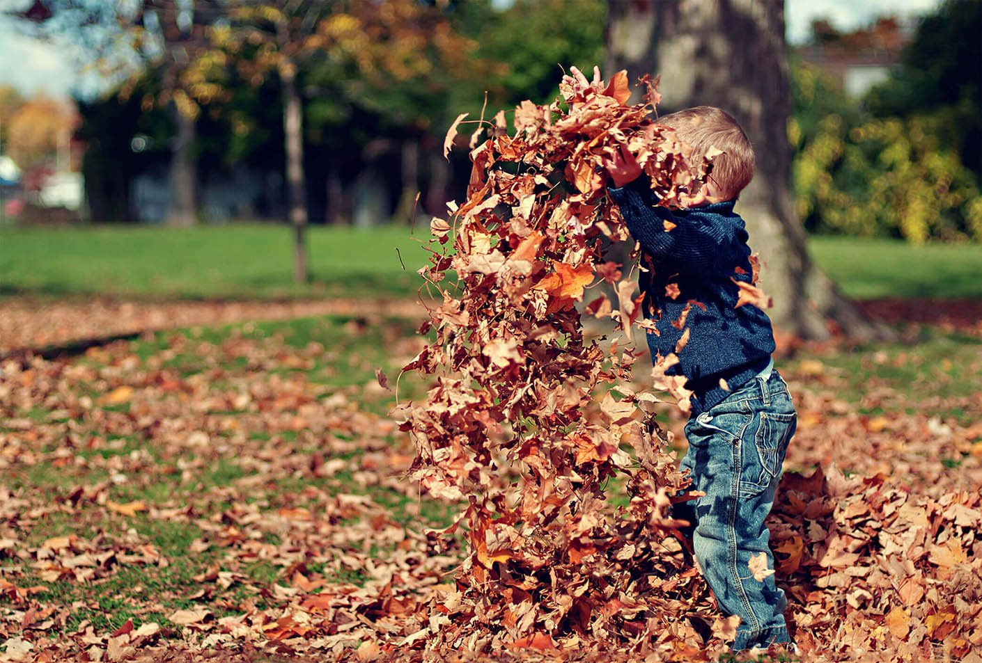 Child playing in a pile of leaves